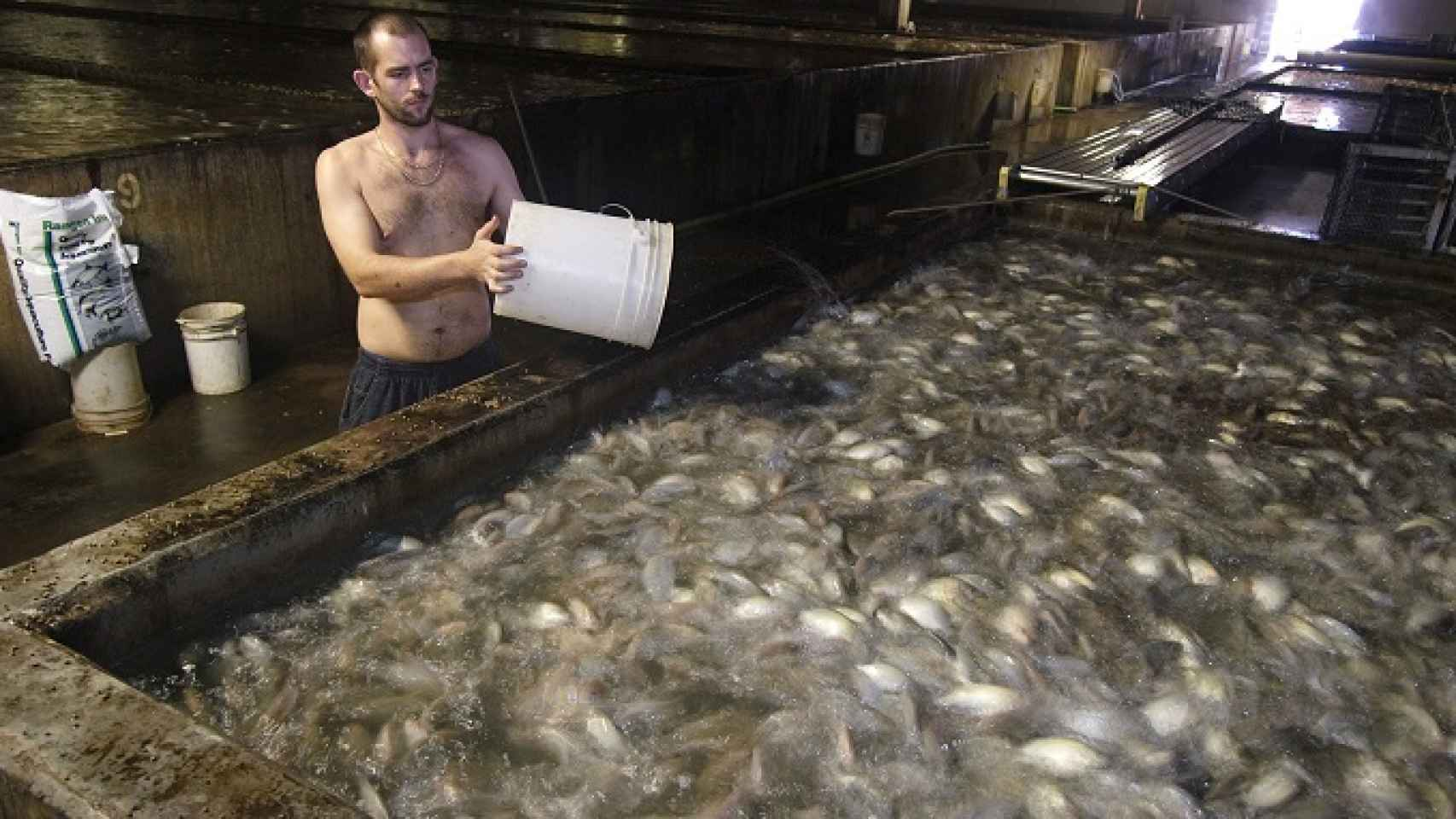 Blue Ridge Aquaculture