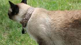 gato-wifi