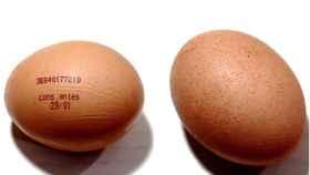 Defectos de calidad en los huevos de gallina