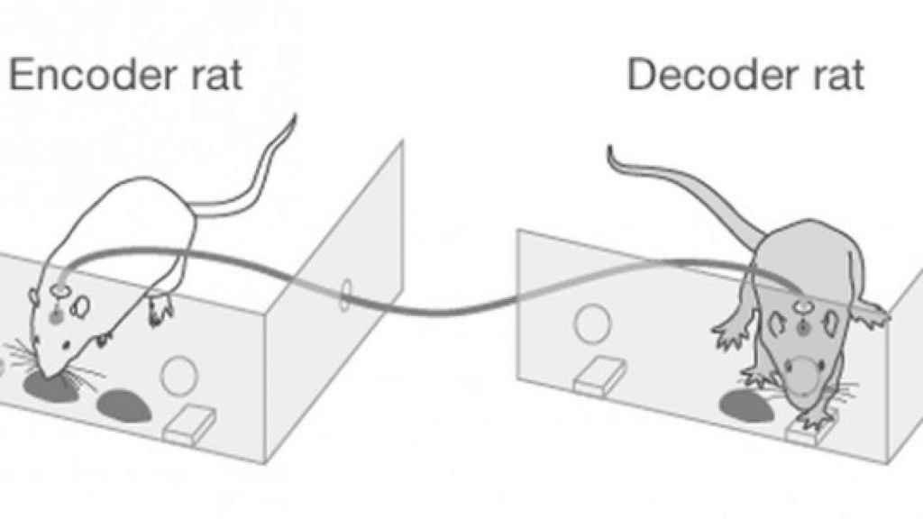 Ratas_conectadas_por_cerebro