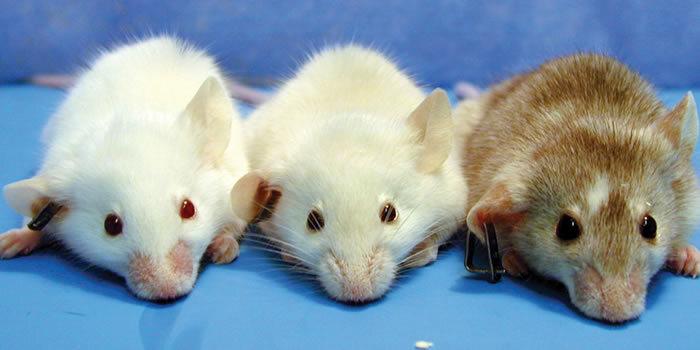 ratones_investigacion