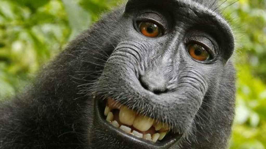 macaco-wikimedia-port