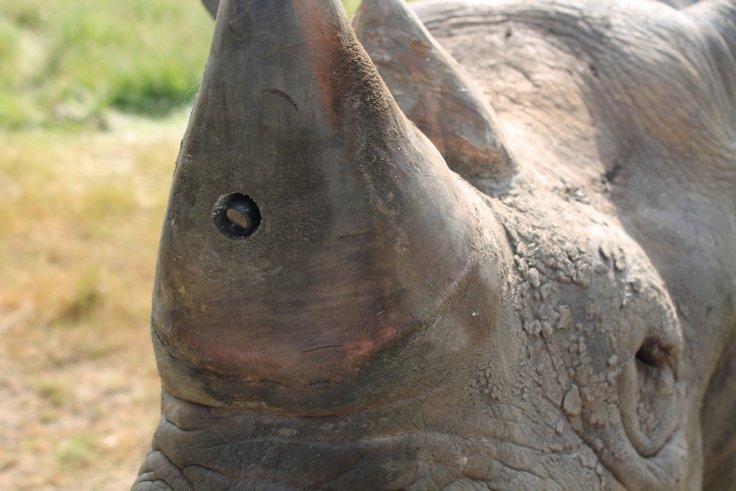 camara rinoceronte