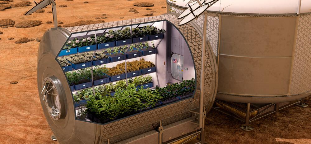 espacio-plantacion