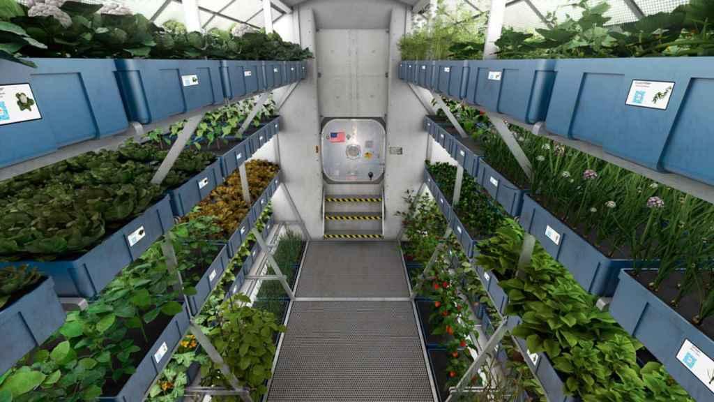 plantas-espacio