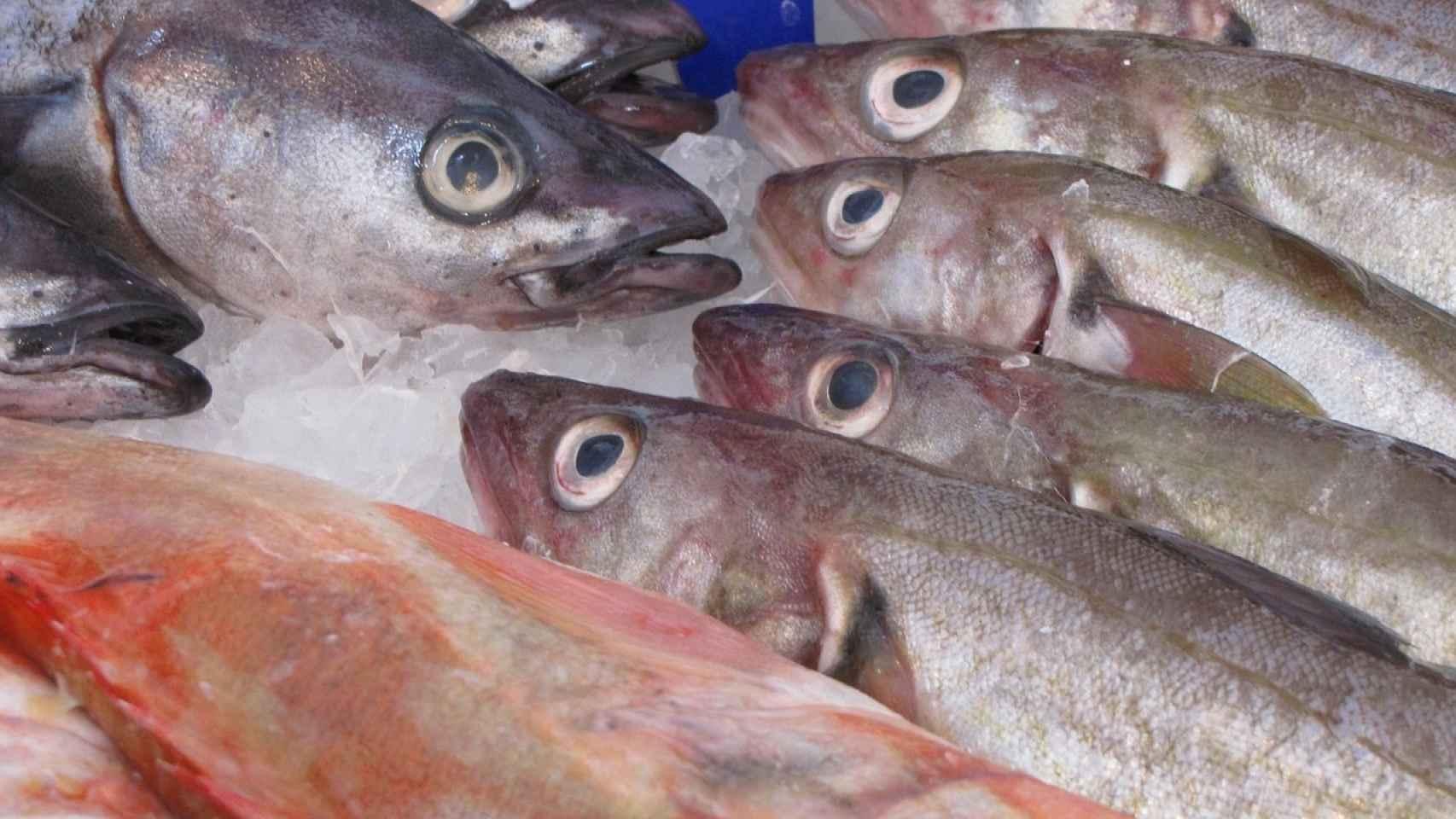pescado-fresco-00