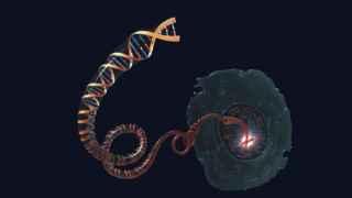 Manejar el ADN para curar