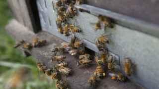 Las abejas mueren y el asesino sigue suelto