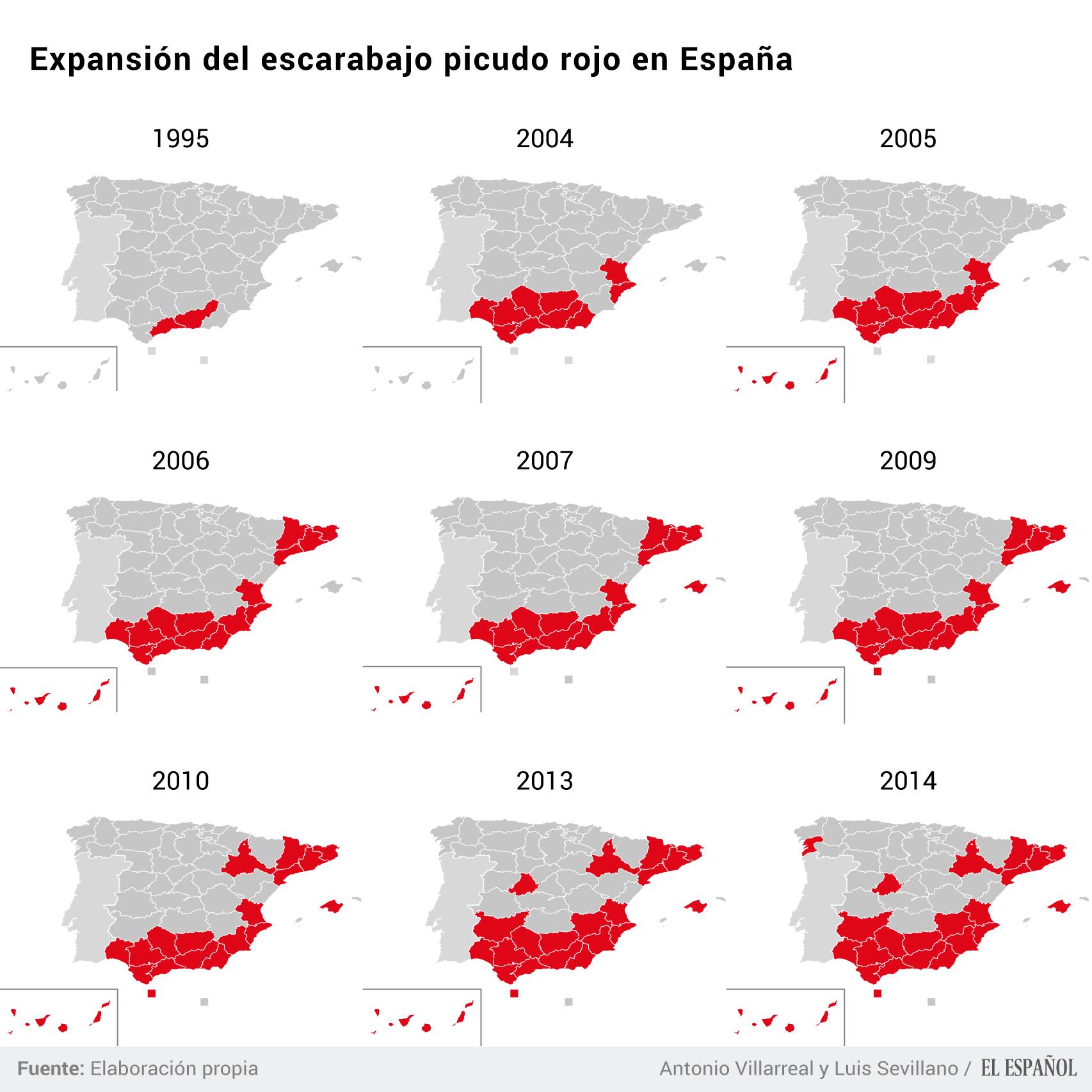 Expansión del picudo rojo en España