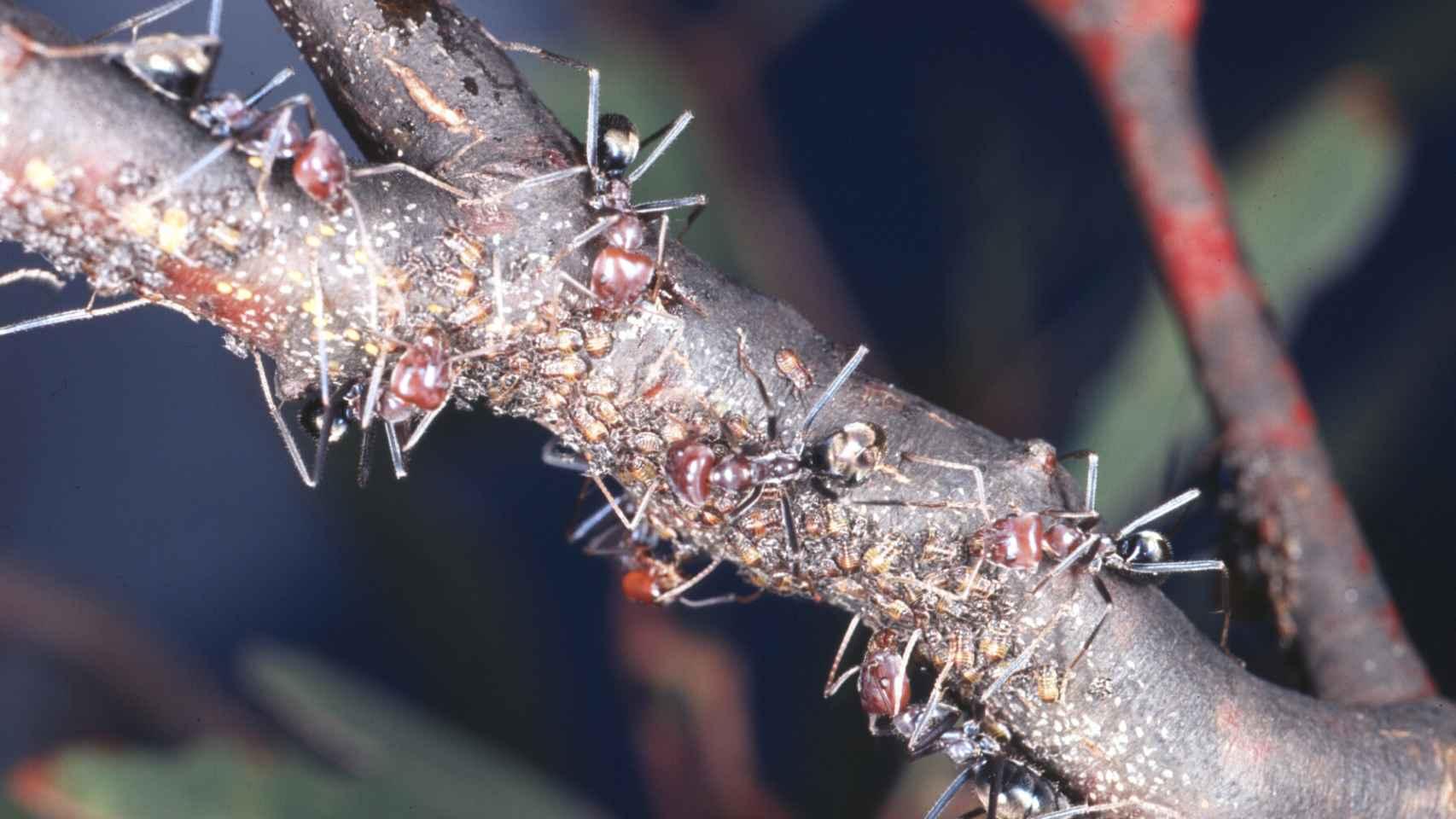 Estos pequeños insectos sociales tienen mucho que enseñarnos.