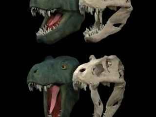 La terrorífica mandíbula de un tiranosaurio.