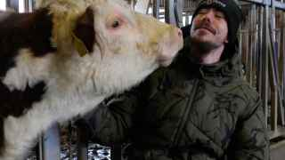 Un preso con una vaca.