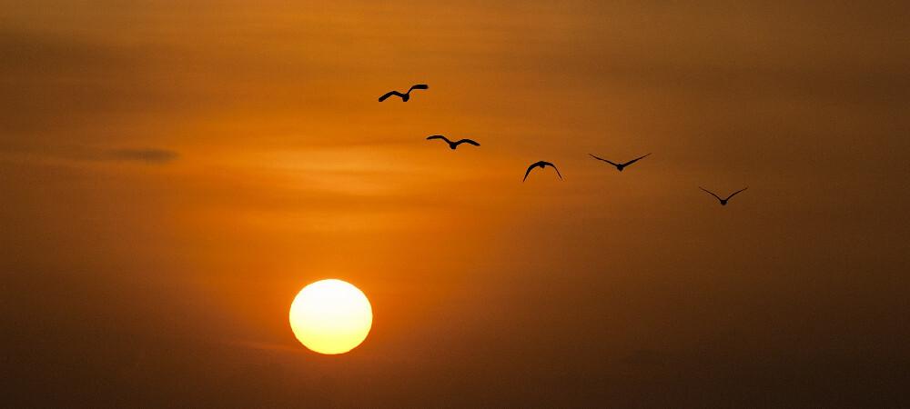 aves pajaros