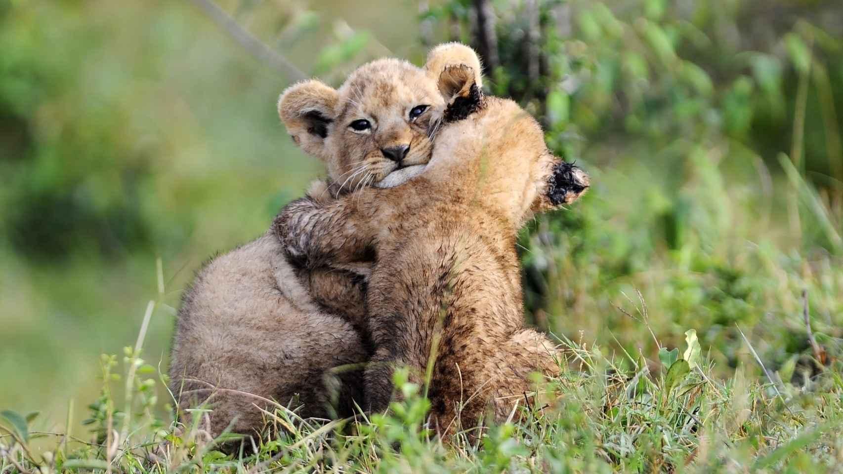 En el reino animal también se dan gestos de reconciliación.