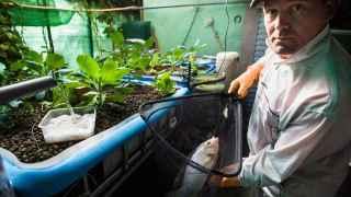 Criar peces y cultivar hortalizas en casa para paliar el hambre