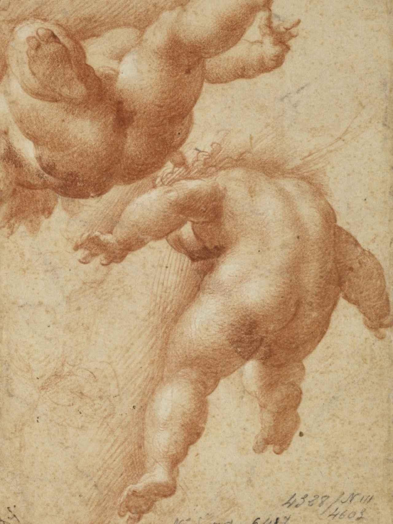 Dos puttis volantes, de Parmigianino