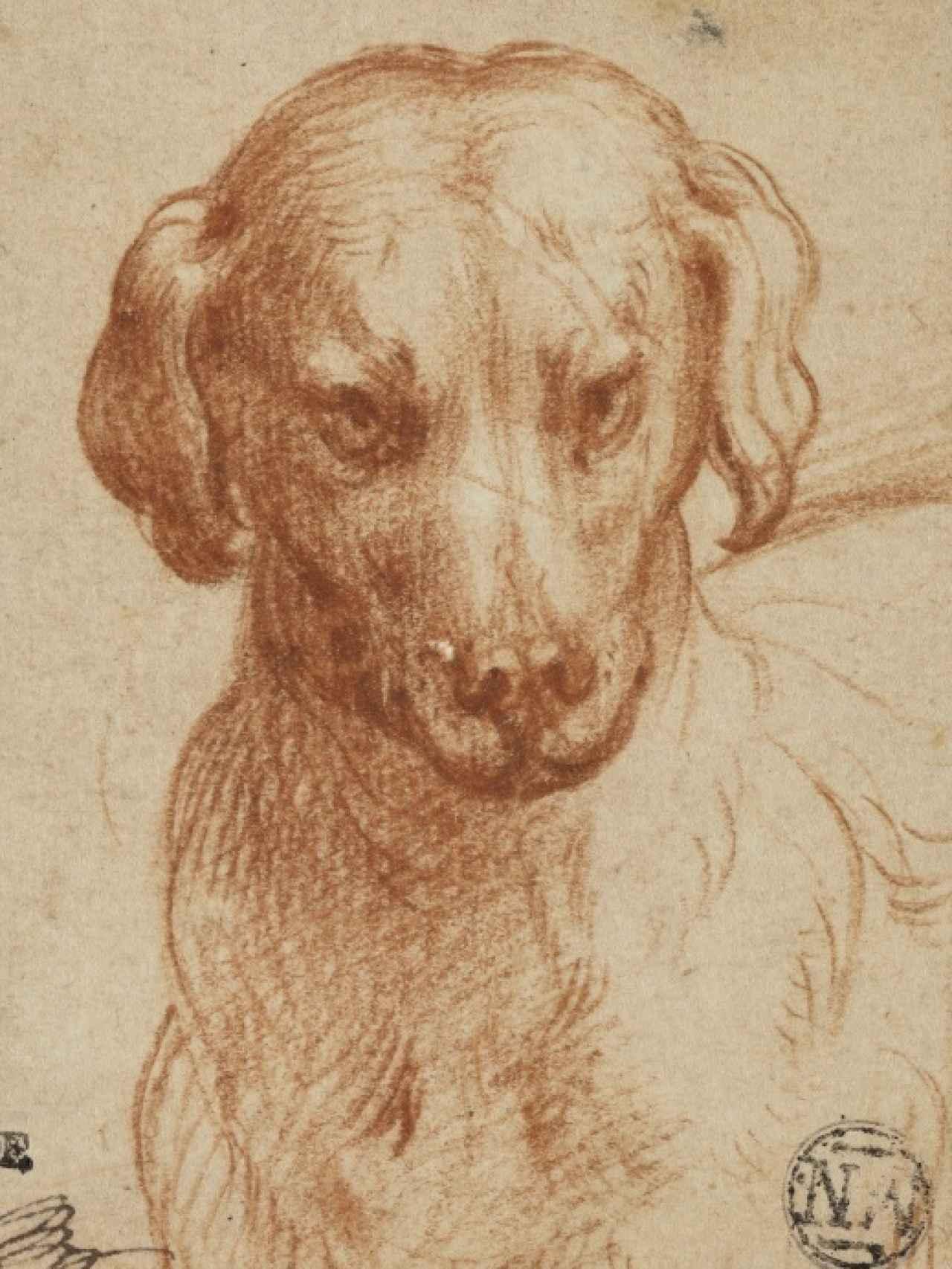 Un perro entre los dibujos expuestos.