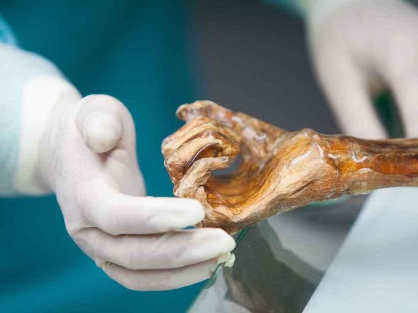 Detalle de la mano del 'hombre de hielo'.