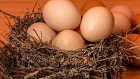 huevo-fresco-viejo-00