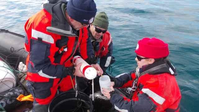 Efectivos y científicos españoles toman muestras en aguas antárticas.