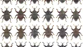 Parte de las 24 especies de escarabajos descubiertos.