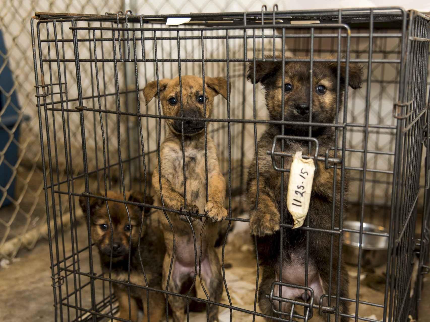 Perros entre rejas en Carolina del Norte/Reuters