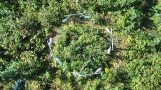 Vista aérea del bosque donde se hizo el experimento.
