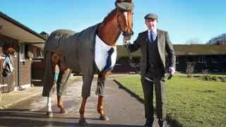 Los caballos también saben vestir