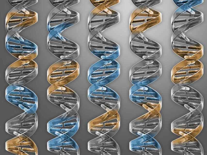 Los científicos han generado un genoma bacteriano mínimo.