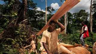 Miembros de la tribu pigmea Baka, habitantes de los bosques originales de Camerún.