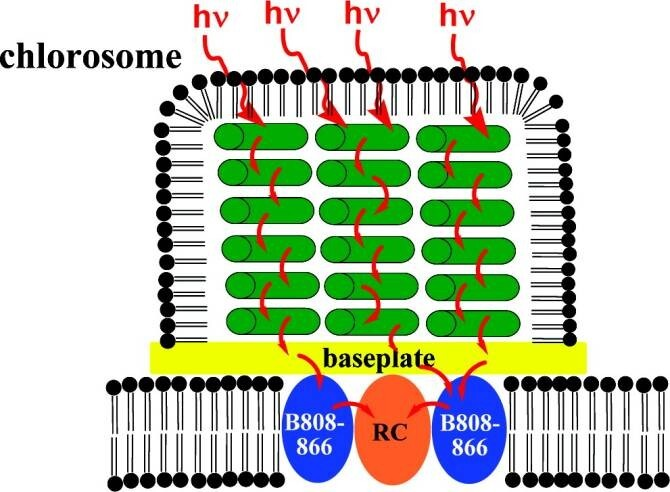 celula-solar-biologica