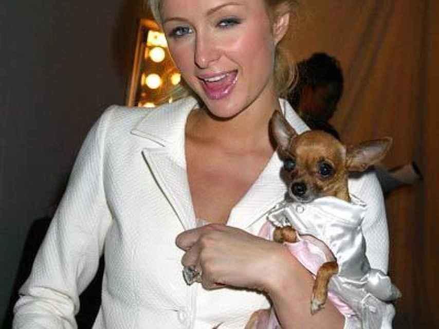 Paris Hilton y su anterior chiguagua