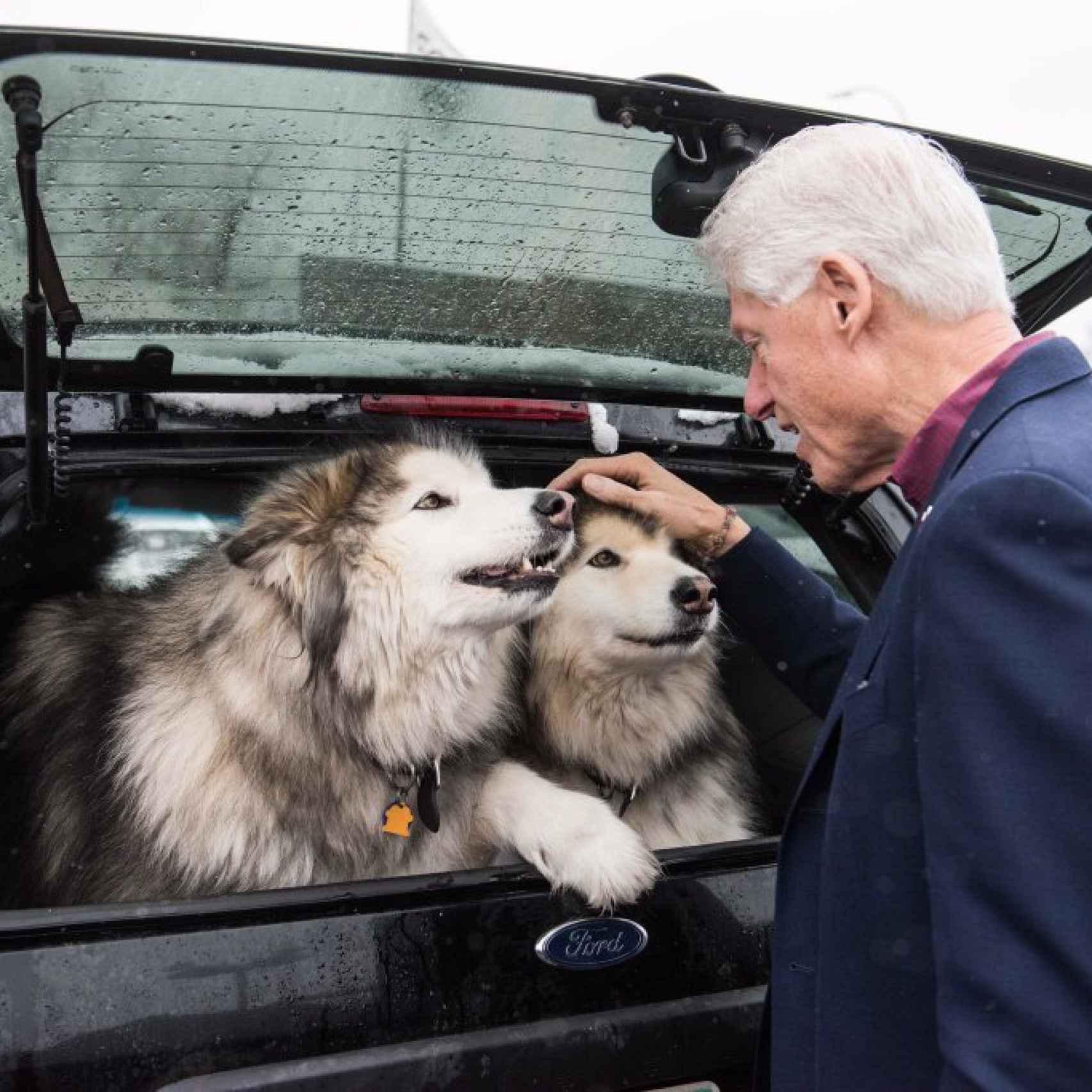 Bill Clinton con sus perros huskies