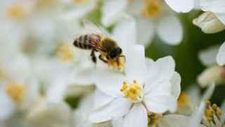 Una abeja recoge el polen de una flor.