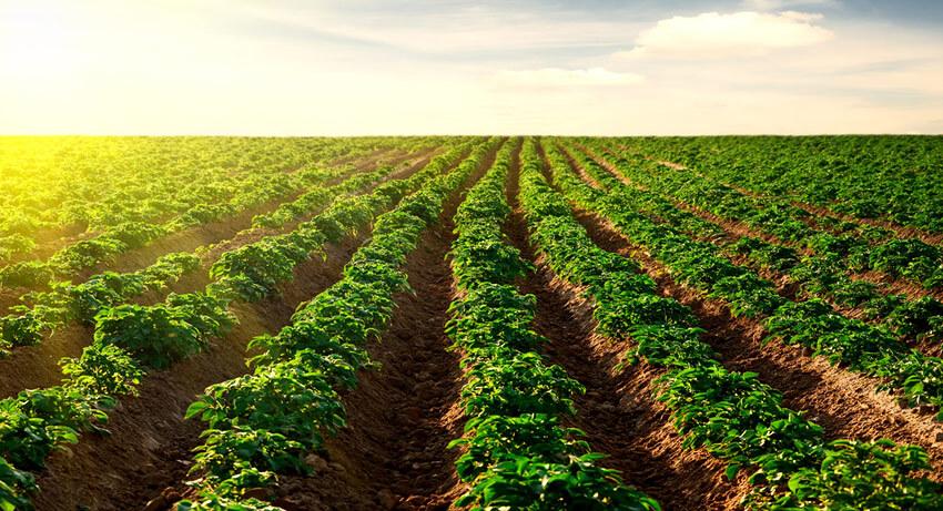 agricultura cultivo