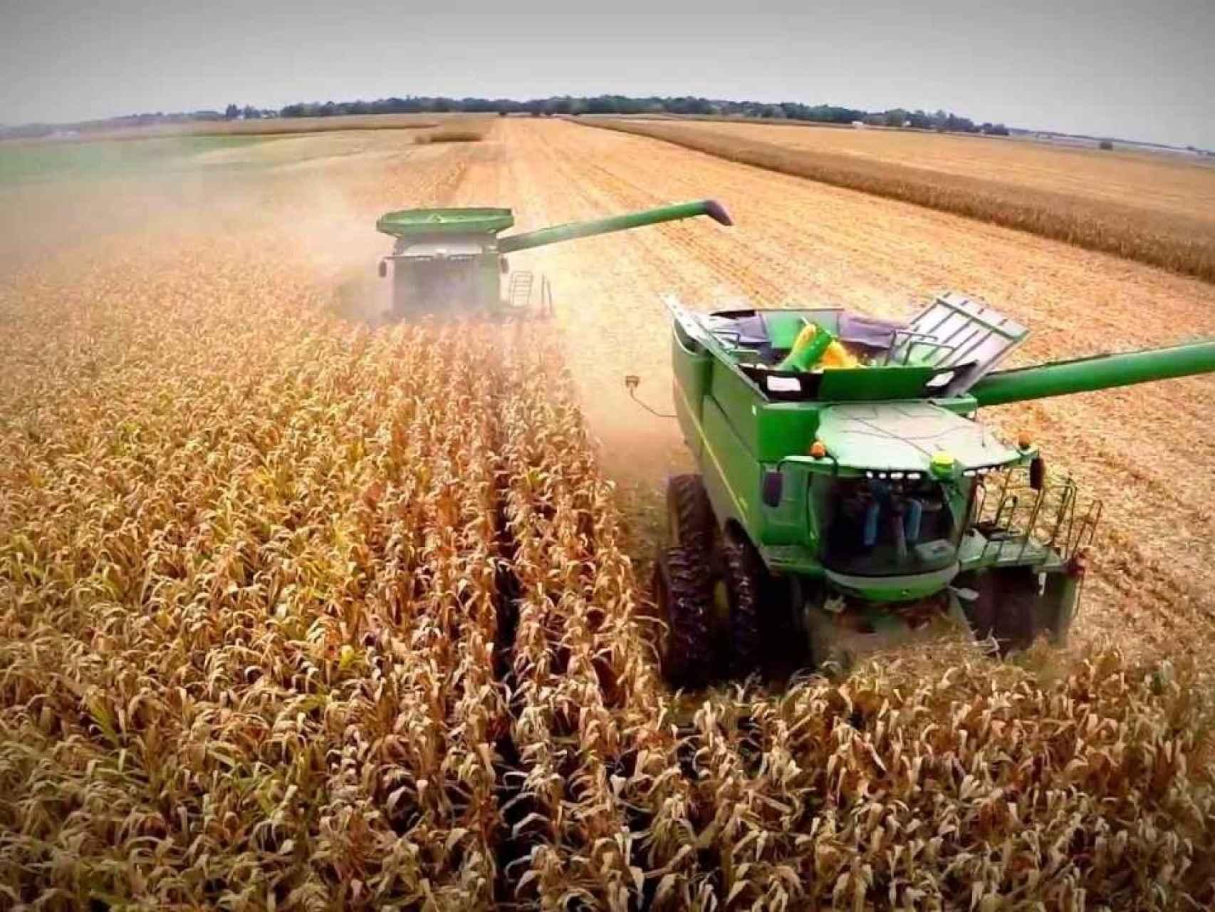 ¿Puede caer la producción del cereal a causa de la roya?