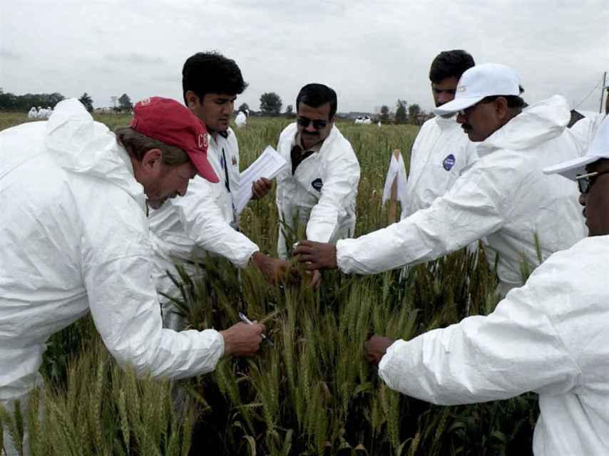 Los investigadores trabajan sobre el terreno para tratar de frenar al hongo.