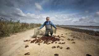 Un pescador de Isla Mayor muestra decenas de cangrejos capturados.