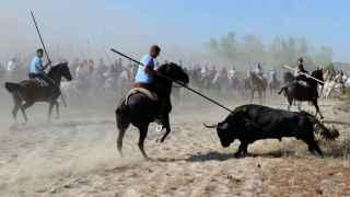 Tordesillas no matará al Toro de la Vega