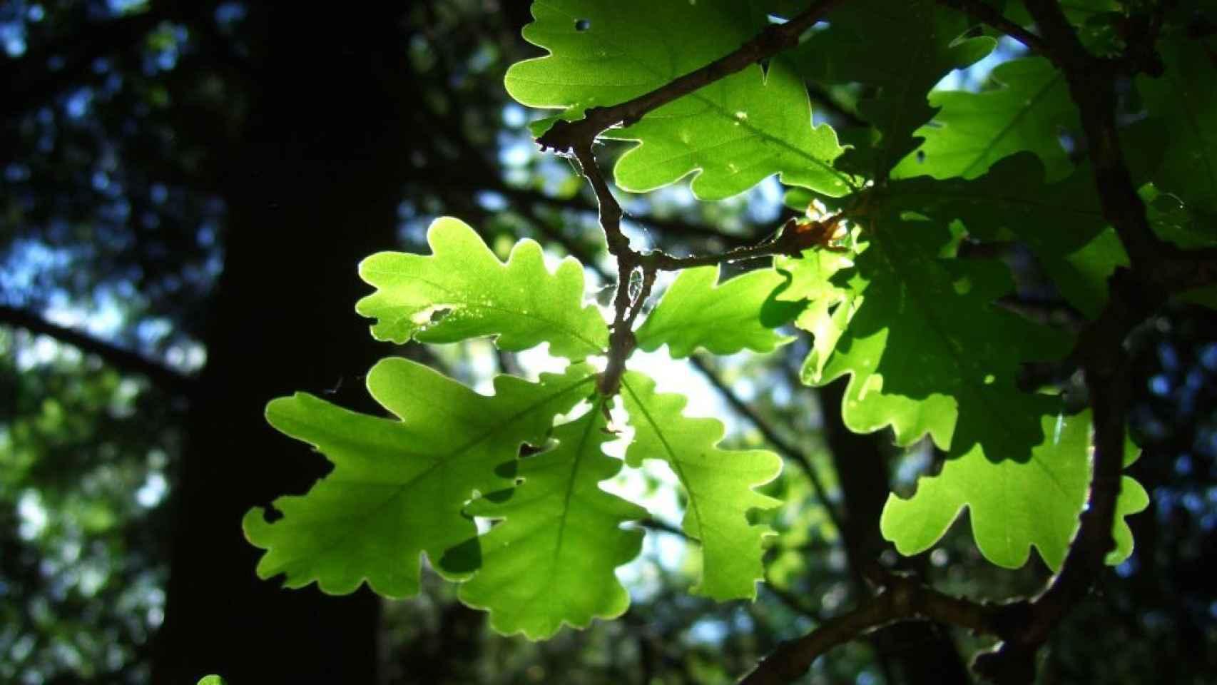 La fotosíntesis funciona gracias a la física cuántica