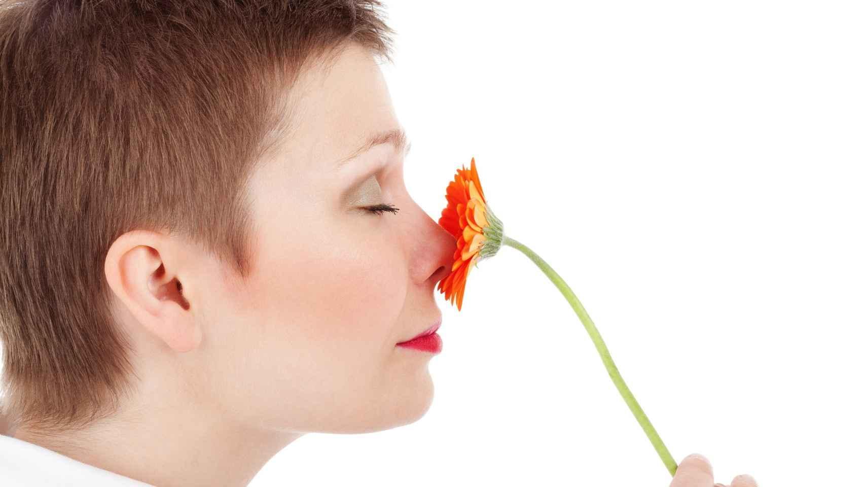 ¿Un fino olfato cuántico? Hay muchas dudas.