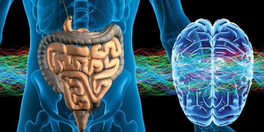 cerebro_bacterias_intestinales