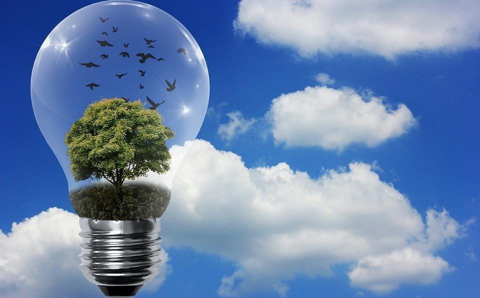 energia-biomasa