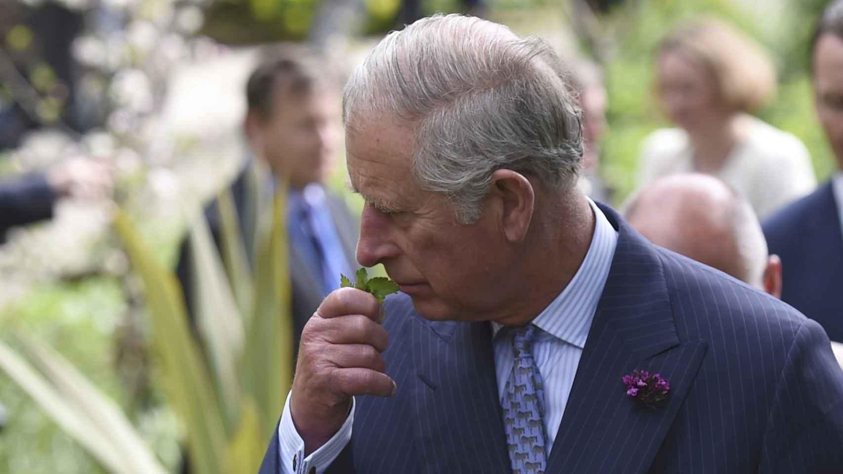El Príncipe Carlos huele una planta en el Glenveagh National Park.