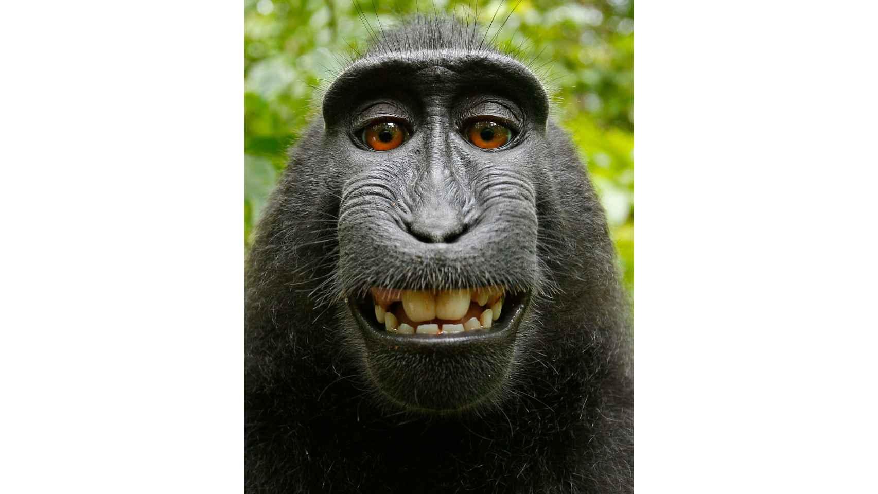 ¿Ríen también los animales?