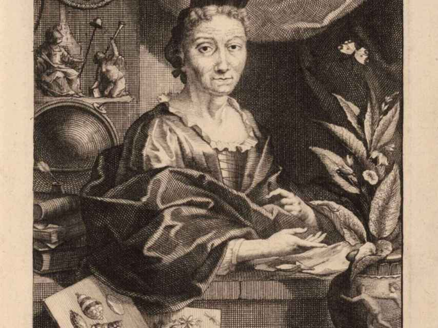 Maria Sibylla en un retrato de Jacob Houbraken.