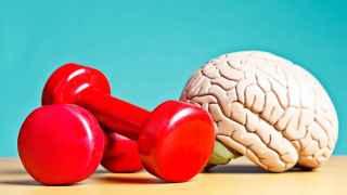 Al igual que el cuerpo, la mente también necesita entrenamiento constante