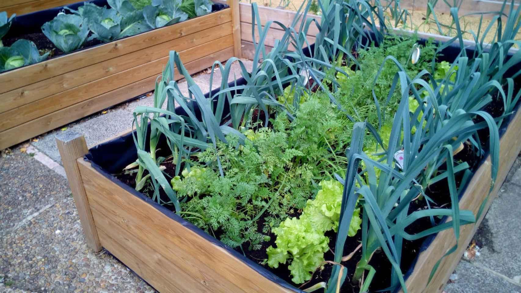 Jardineras forradas con plástico especial para el caso de huerto en patio o zona de solado. /