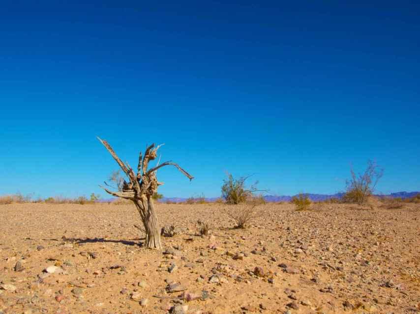 El cambio climático tiene efectos sobre la vida.