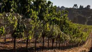 Cuernos de vaca, vejigas de ciervo, vinos excelentes y millones en subvenciones